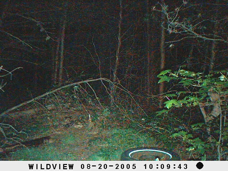 trail cam pics-picture-003.jpg