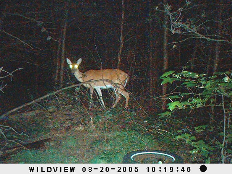 trail cam pics-picture-004.jpg