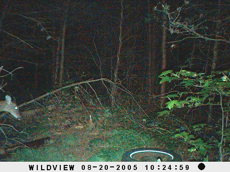 trail cam pics-picture-005.jpg