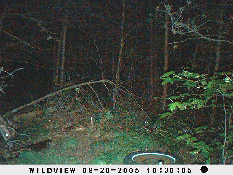 trail cam pics-picture-006.jpg