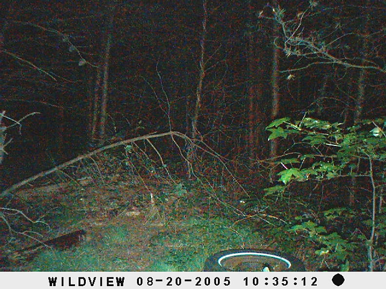 trail cam pics-picture-007.jpg