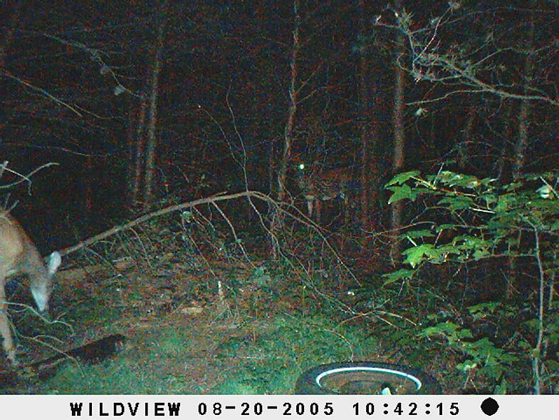 trail cam pics-picture-008.jpg