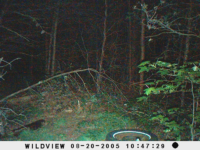 trail cam pics-picture-009.jpg