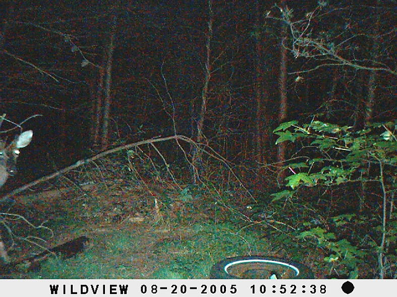 trail cam pics-picture-010.jpg