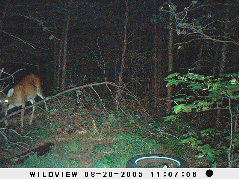 trail cam pics-picture-011.jpg