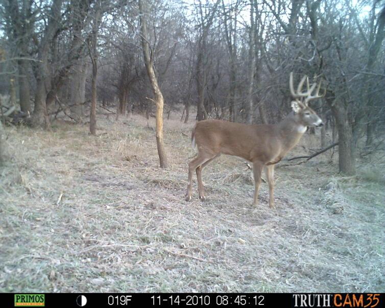 Beds & Bottoms - 82a KS Deer Land For Sale-prms0044.jpg