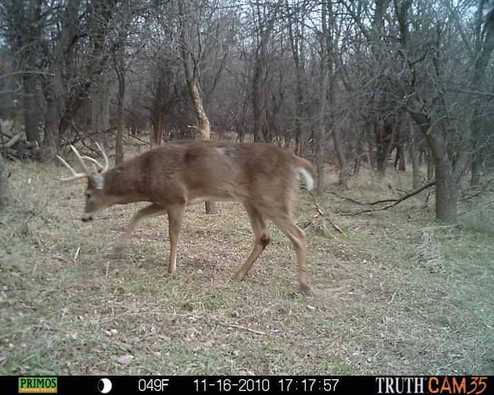 Beds & Bottoms - 82a KS Deer Land For Sale-prms0069.jpg