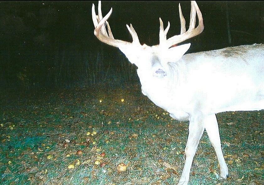 Trail cam Ohio buck-scan0001.jpg