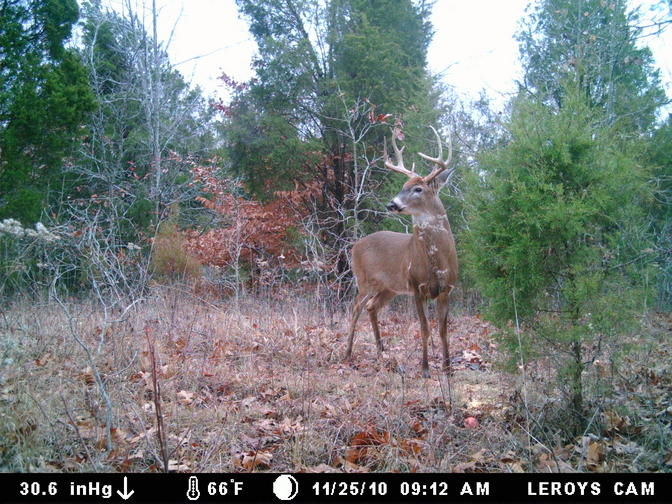 Great KY buck-smdgc0054.jpg