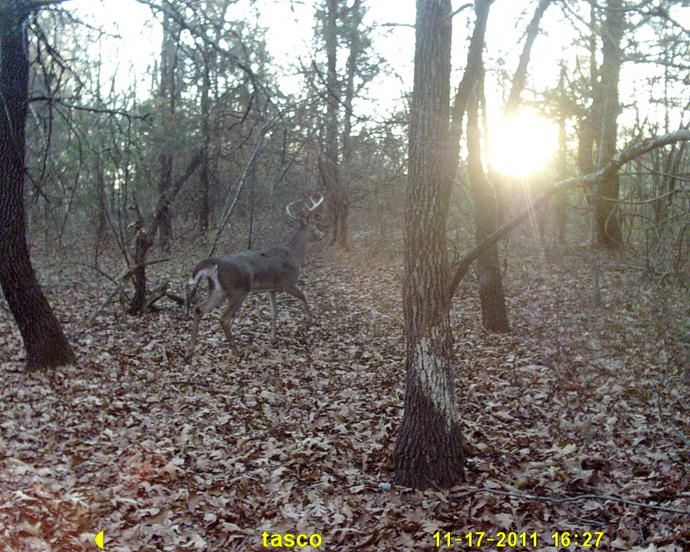 Official Thread 2011 Trail Cam Pic Contest ( cash)-sunp0003.jpg
