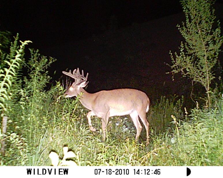 how old is this Buck-sunp0005.jpg
