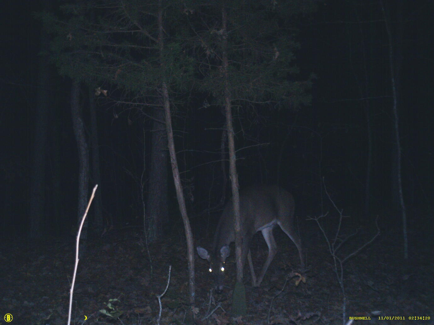 Official Thread 2011 Trail Cam Pic Contest ( cash)-sunp0021.jpg