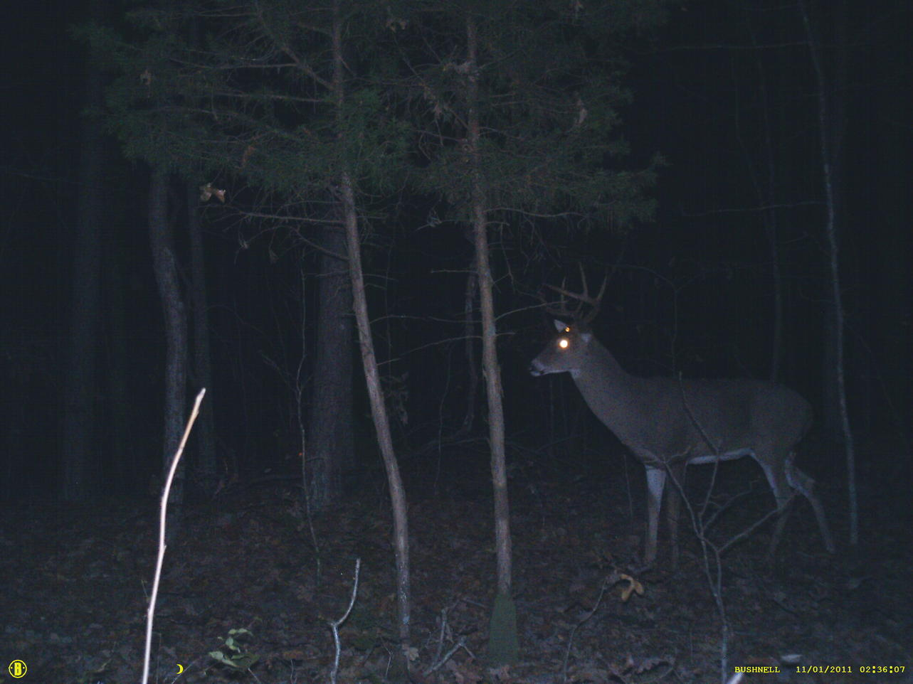 picking out trail cam-sunp0022.jpg