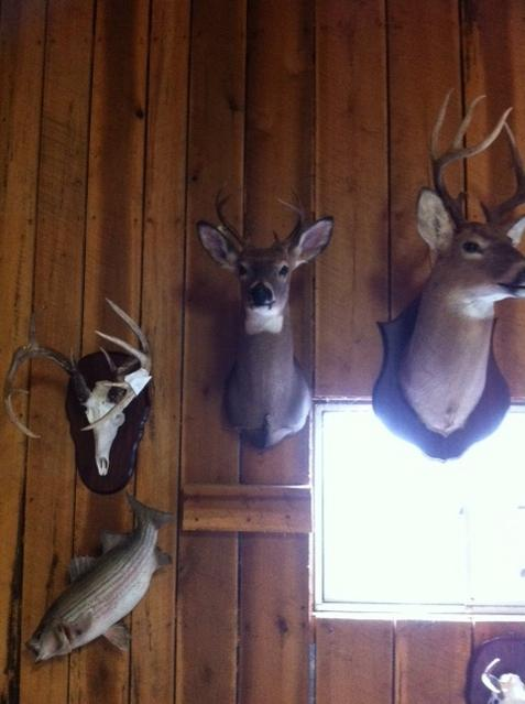 deer mount-tax-shop.jpg