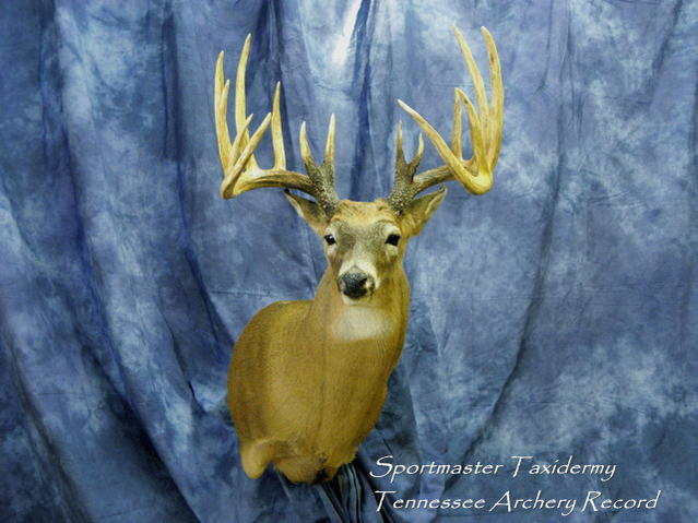 Professional Deer Taxidermy-tennessee-archery-record.jpg