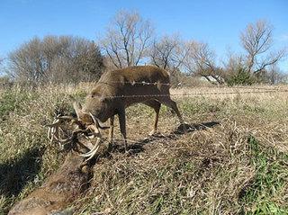 Iowa gun season starts this weekend post pictures here.-fight.jpg