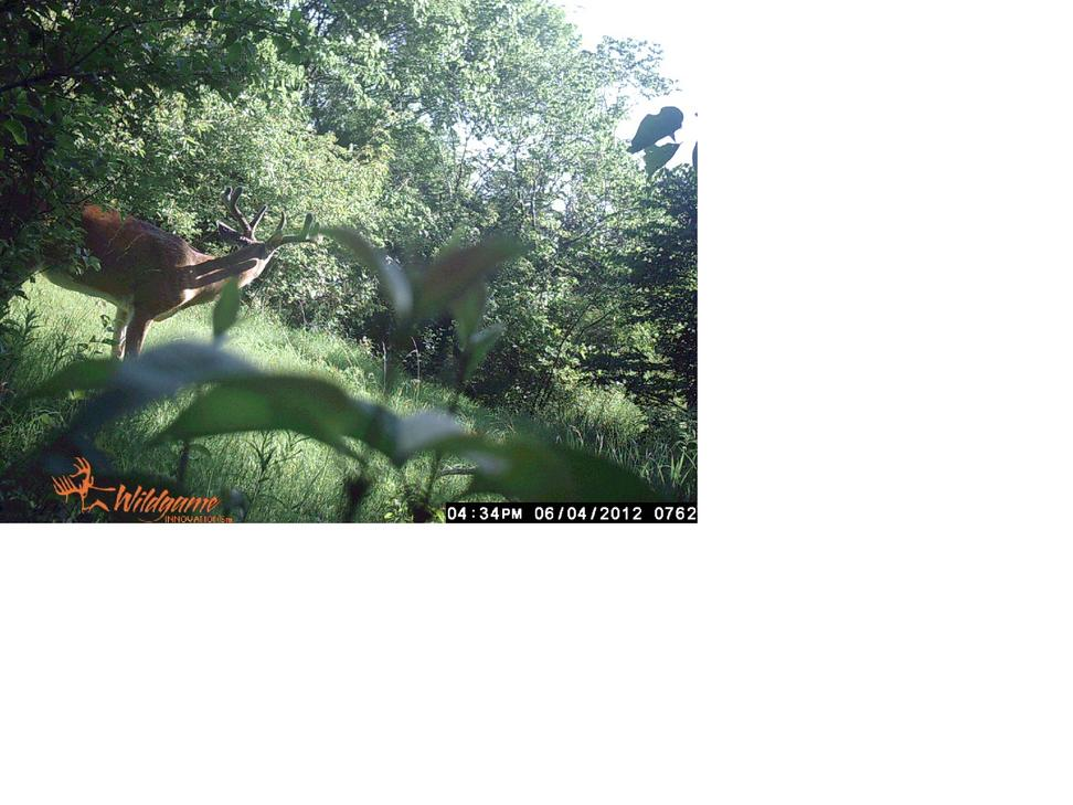 How Old Is He?-trail-cam-buck-2-june-2012.jpg