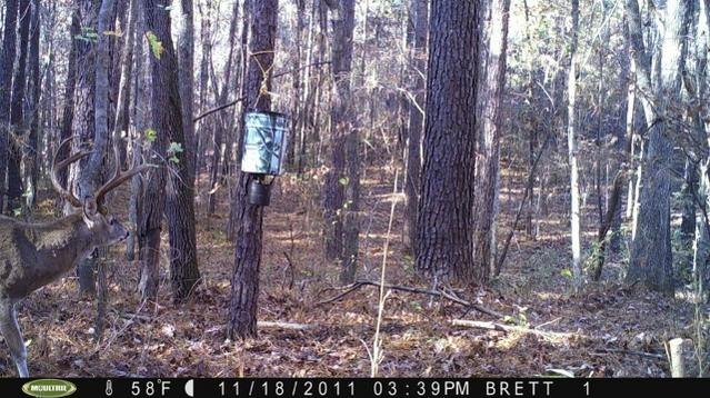 Hunting Club looking for members-trail-cam-buck-640x359-.jpg