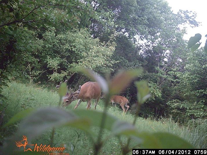 How Old Is He?-trail-cam-buck-june-2012.jpg