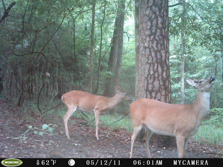 may trail cam pics-trail-cam-may-041.jpg