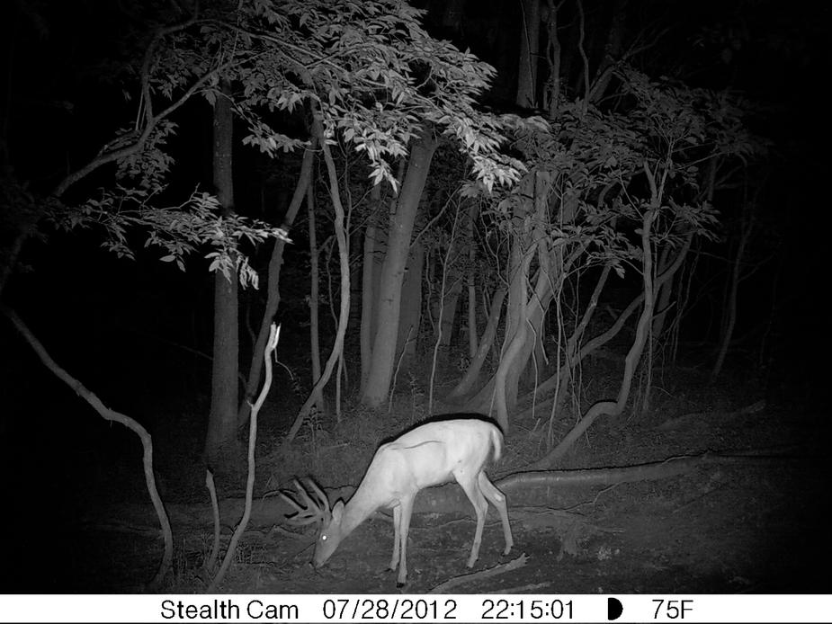 Hunting Season-trail-cam-pic-buck.jpg