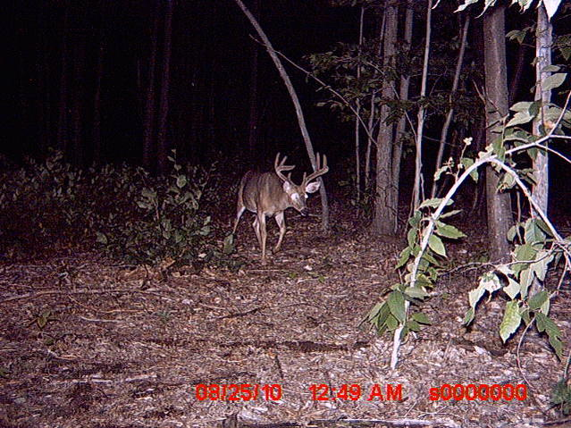Bucks in Northwood NH-trail-cam-pics-002.jpg