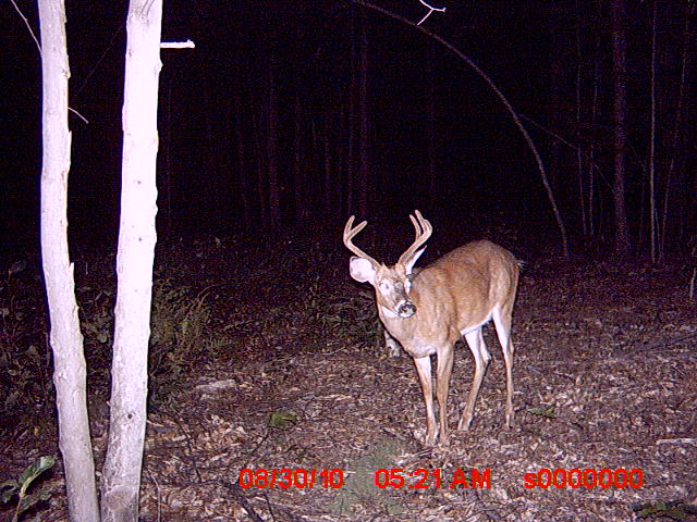 Bucks in Northwood NH-trail-cam-pics-83010-063.jpg