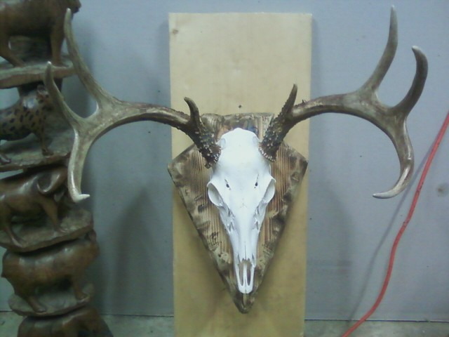 euro mount-walter-finaly-done.jpg