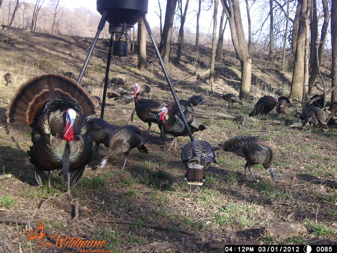 DIY KS or OK Turkey Hunts-wgi_0085.jpg