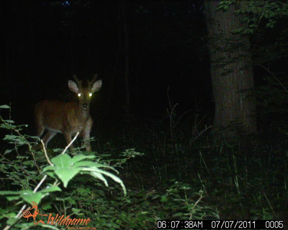 Bucks in Velvet...-wildgame-057.jpg